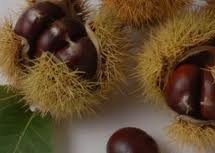 CHESTNUT AND HAZELNUT FESTIVAL – ARITZO – 27 TO 28 OCTOBER