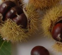CHESTNUT AND HAZELNUT FESTIVAL – FULL PROGRAM – ARITZO – 27 TO 28 OCTOBER