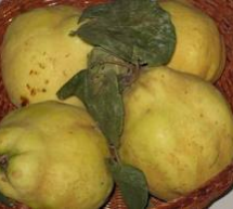5th QUINCES APPLES FESTIVAL – SIRIS – SUNDAY NOVEMBER 18