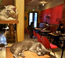 <!--:it-->A TORINO NASCE NEKO, IL CAT CAFE&#8217; <!--:--><!--:en-->IN TORINO BORN THE CAT CAFE&#8217;<!--:-->