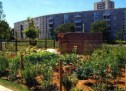 URBAN GARDENS IN CAGLIARI, PART THE INVITATION TO ASSIGNMENT OF SPACE