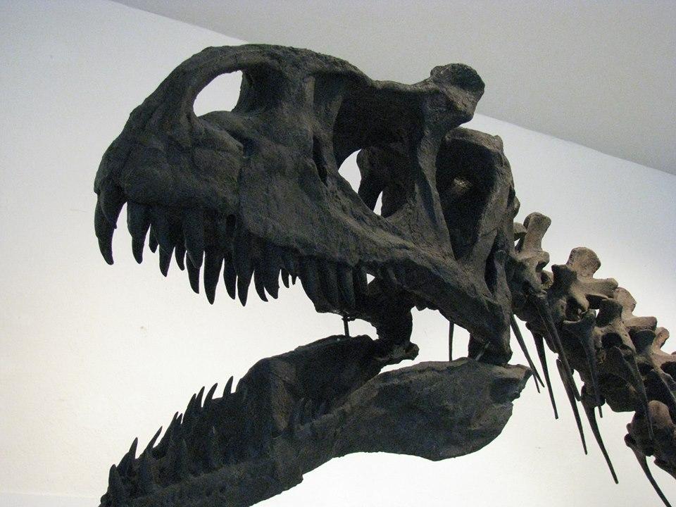 Museo di storia naturale aquilegia apertura gratuita for Orari apertura bricoman cagliari