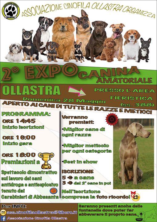 Expocani Calendario.2 Expo Canina Amatoriale Ollastra Domenica 28 Maggio