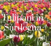 TULIPANI IN SARDEGNA – TURRI – DAL 29 FEBBRAIO 2020