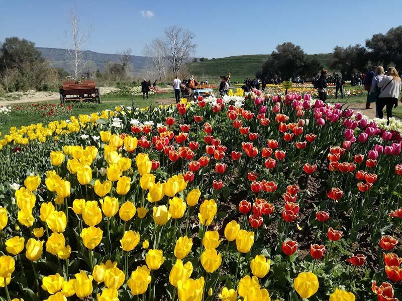 turri_tulipani_sardegna_aprile_2020